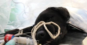 Mogyoró musste erneut operiert werden