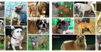 Hundetransport Juni 2015