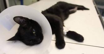 Mieze Morzsi hat einen schlimmen Beinbruch erlitten