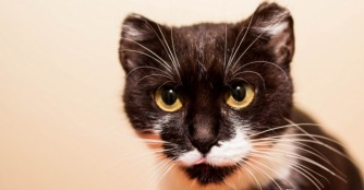 Katze der Woche: Myrtill