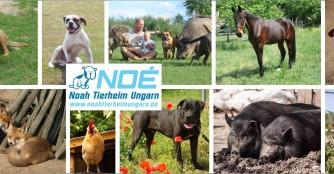 NOAH Tierheim Ungarn - Das Lebensheim
