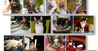 NOÉ Katzenrettung Rückblick 2018