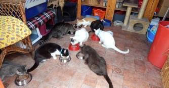 Full House bei der Katzenrettung des NOAH Tierheimes!