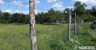 Wir benötigen Zaunpfähle für eine neue Weide!