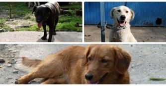Carlos, Szendi und Szelma wurden von der Tötungsstation gerettet