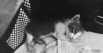 Gedanken zum Tod eines Kätzchens