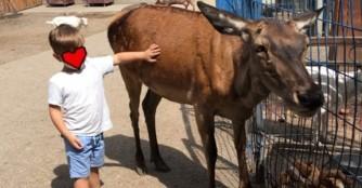 Ein toller Ausflug ins NOAH Tierheim Ungarn