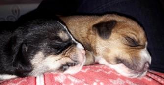 7 Hundebabies müssen von Hand aufgezogen werden
