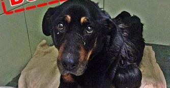 Tia's Halter wurde wegen Tierquälerei verurteilt!