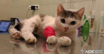 Tinácska hat ein gebrochenes Beinchen