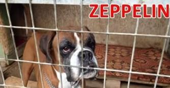 Zeppelin News!